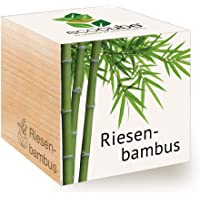 Feel Green Ecocube Riesenbambus, Nachhaltige Geschenkidee (100% Eco Friendly), Grow Your Own/Anzuchtset, Pflanzen Im Holzwürfel, Made in Austria