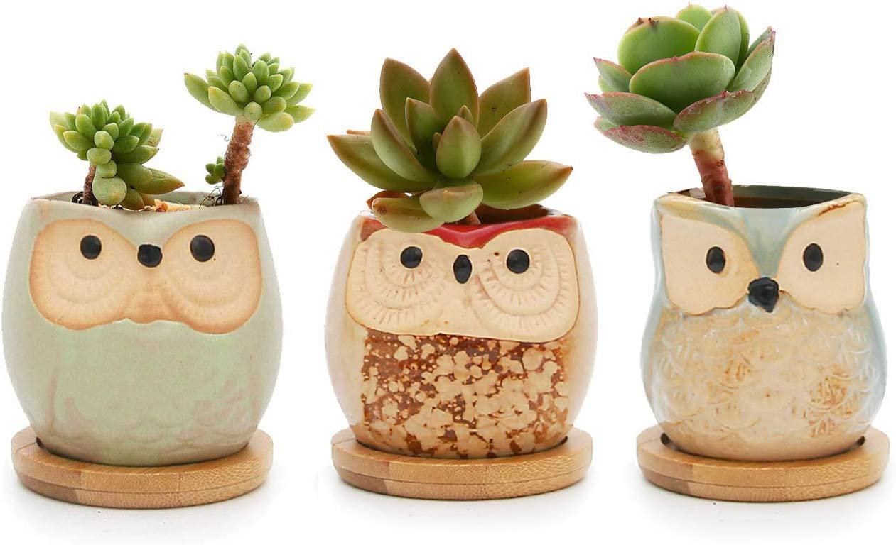 T4U Ceramic Succulent Planter Pots with Bamboo Saucers Mini Size, Cute Owl Bonsai Pots Home and Office Decoration Desktop Windowsill Gift, for Gardener on The Birthday Set of 3