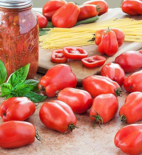 San Marzano Tomato 4 Plants - Heirloom Paste Tomato - Great Flavor