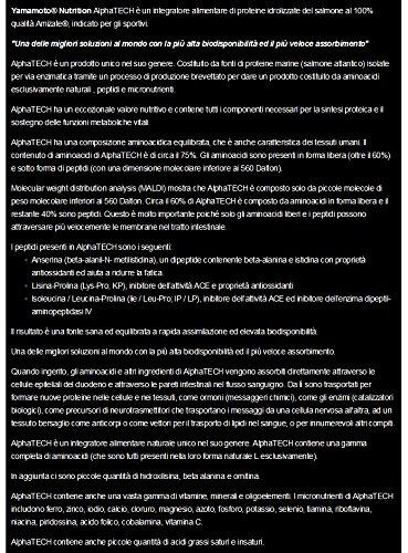 Yamamoto Nutrition Alphatech Suplemento Nutricional de Proteínas de Salmón Hidrolizadas - 300 Cápsulas: Amazon.es: Salud y cuidado personal