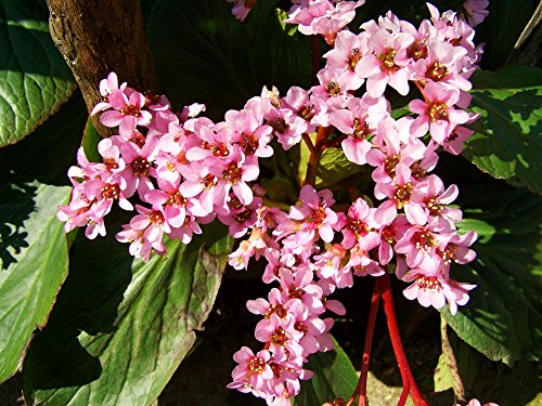 Home Comforts Laminated Poster Leather Leaf Flower Spring Pi