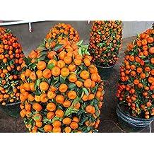 Potted Edible Fruit Seeds Bonsai Climbing Orange Tree 55+Seeds