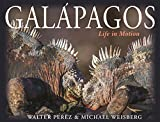 Galápagos: Life in Motion