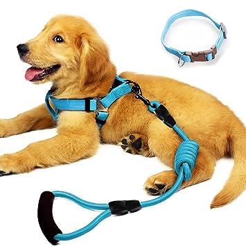 Amazon.com: YUSENPET - Arnés de correa para perro con collar ...