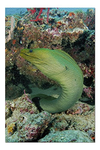 Eel Green (Green Moray EEL (20x30 Premium 1000 Piece Jigsaw Puzzle, Made in USA!))