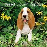 Basset Hound Puppies 2010 Mini Wall