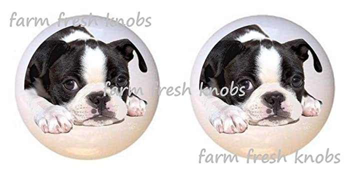 SET OF 2 KNOBS   Boston Terrier Puppy Dog   Dogs   DECORATIVE Glossy  CERAMIC Cupboard