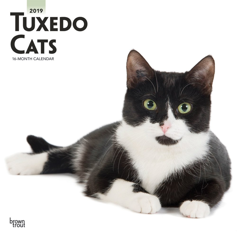 Tuxedo Cats 2019 Square Wall Calendar (Multilingual) Calendar – Wall Calendar, 1 Sep 2018 BrownTrout 1975401123 Pets & Equine Animal Care