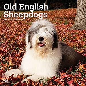 BrownTrout, 2020 Old English Sheepdogs Wall Calendar 5