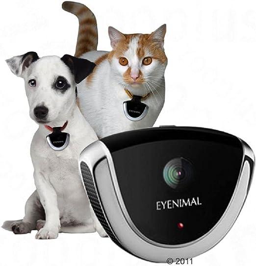 Perro Gato Cuello Mascota Gadget de cámaras de vigilancia micrófono 4 GB memoria flash: Amazon.es: Productos para mascotas
