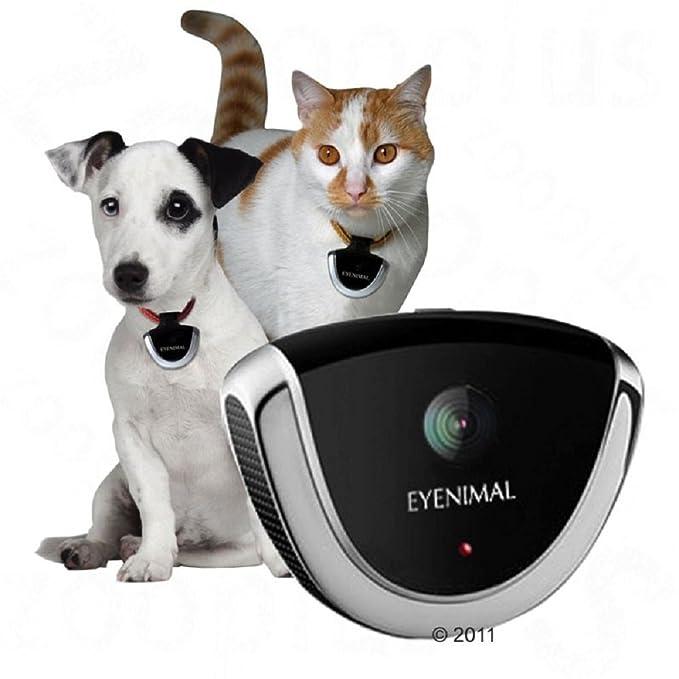 Perro y Gato) cámara de vigilancia cuello Pet Gadget Micrófono 4 GB de memoria flash: Amazon.es: Productos para mascotas