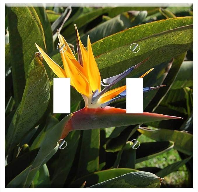 Switch Plate Double Toggle Strelicja Madera Flora Nature Flower Amazon Com