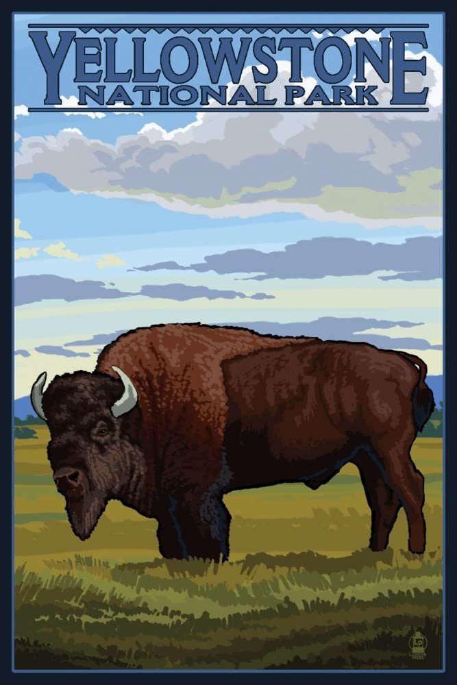 Yellowstone National Park, Wyoming - Bison Scene (12x18 Art Print, Wall Decor Travel Poster)