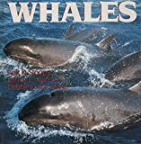 img - for Whales book / textbook / text book