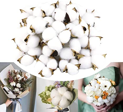 Genuine Cotton with 5+ Petals Dried cotton branch 60cm +//- 10 Piece