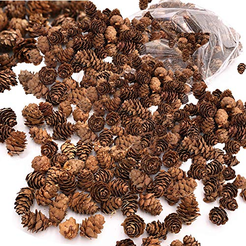 Byher Mini Pinecones in Bulk for Fall and Christmas Crafts - Approx. 450 Small Assorted Sized Pine Cones (2lb - Approx. 450pcs)]()