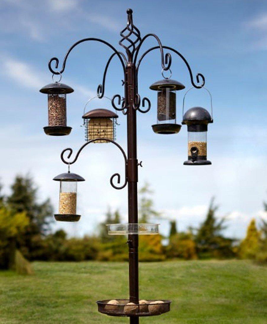 Elegance Bird Feeding