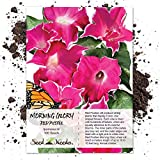 Seed Needs, Red Picotee Morning Glory (Ipomoea nil) 100 Seeds Untreated