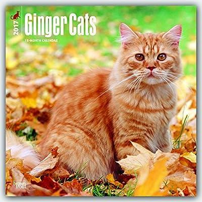 Ginger Cats 2017 Calendar