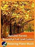 Autumn Forest - Beautiful Fall Leaf Colors - Relaxing Piano Music