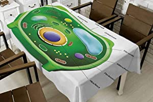 FANOEWI Royal Blue Rectangle Table Cloth Educational Plant Cell Biology Research Botany Anatomy Structure Organic Life Nature Green Pale Blue 70x120 Inch