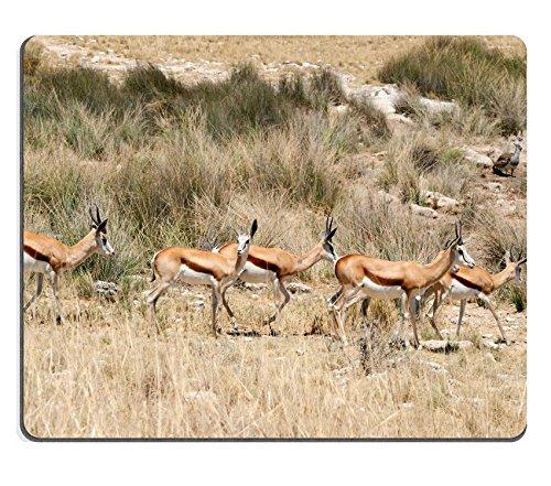 msd-natural-rubber-gaming-mousepad-springbok-group-etosha-namibia-image-24017471