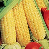buy Park Seed Sugar Buns Hybrid Corn Seeds now, new 2020-2019 bestseller, review and Photo, best price $5.95