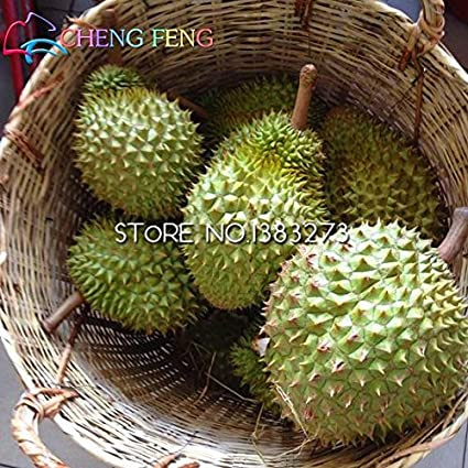Amazon.com : New Arrival 10pcs Durian Seeds the King Of Fruit High ...
