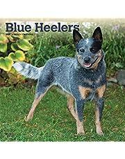 Blue Heelers 2020 Calendar