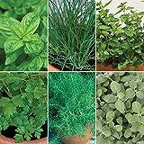 Burpee Italiano' Herb Collection ((Sweet Genovese Basil, Garlic Chives, Oregano Italia Italian Parsley, Rosemary & Berggten Sage), 6 Live Plants 2 1/2'' Pot