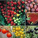 KOUYE GardenSeeds- 50pcs Cherry Tomato Super Sweet Organic Fruit Cherry Tomato Sweet Sweet Mix Home Garden Rarity Tomato Plant Cherrytomate