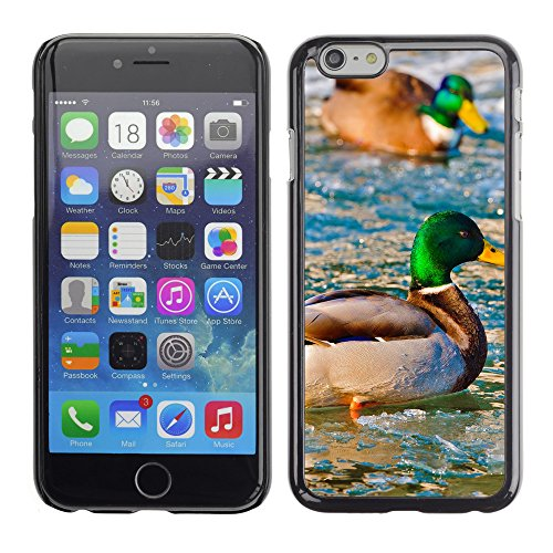 Premio Sottile Slim Cassa Custodia Case Cover Shell // V00003264 canards sur l'eau gelée // Apple iPhone 6 6S 6G PLUS 5.5""