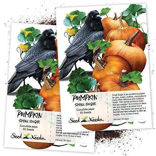 (Seed Needs, Small Sugar Pumpkin (Cucurbita Pepo) Twin Pack of 50 Seeds Each Non-GMO)