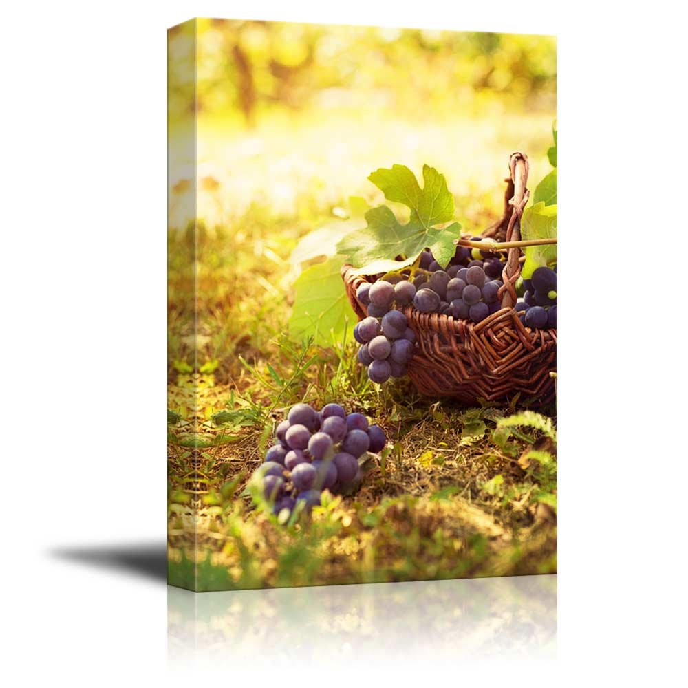 Grapes Harvest in Vineyard with Basket of Grapes in Autumn Wall ...