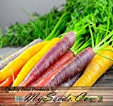BIG PACK x Organic Rainbow Mix Carrot (1,000+) Seeds - Atomic Red, Bambino Orange, Cosmic Purple, Lunar White and Solar Yellow - By MySeeds.Co