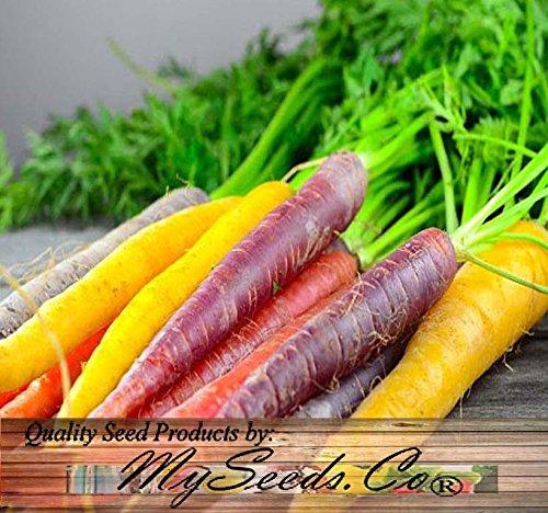 BIG PACK Organic Rainbow Seeds product image