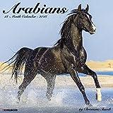 Arabians 2018 Calendar
