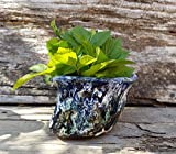 Ceramic Succulent Planter of irregular form, hand built outdoor chamotte planter, cactus plant pot
