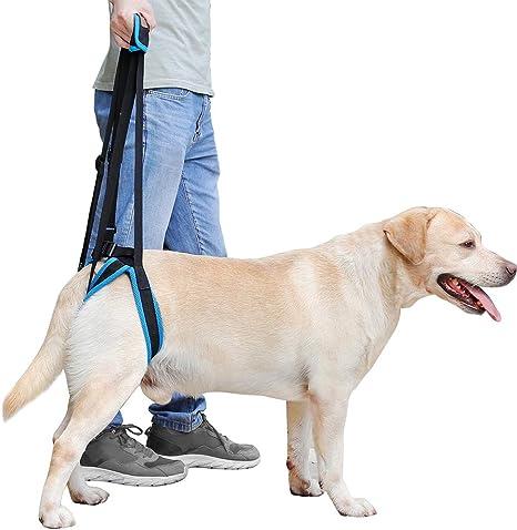 FLAdorepet Arnés de apoyo para perros para patas traseras, arnés ...