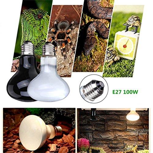 Ampoule 100W Reptile Tortue Chick Pet Brooder Basking Heat UVA Lumire Buckdirect Worldwide Ltd.