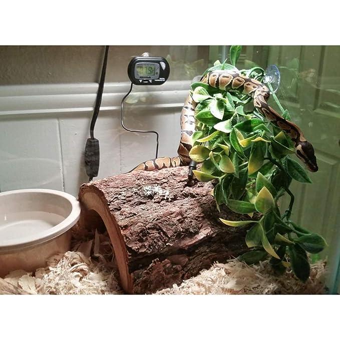 non-brand Sharplace Adornos de Terrarios Reptiles Complimentos Pecera Acuario Plantado Fácilmente Cómodo - S: Amazon.es: Jardín