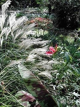 The Rain Garden Handbook Creating a Garden that Captures Rain Water