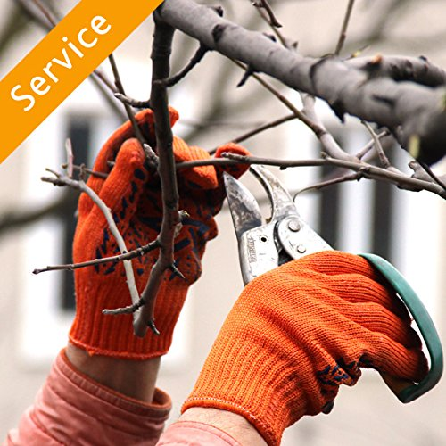 Tree Trimming or Pruning - 4 Trees from Amazon Home Services