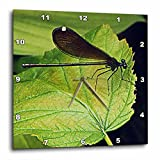 3dRose dpp_202502_1 Dragonfly on a Leaf Wall Clock, 10 x 10