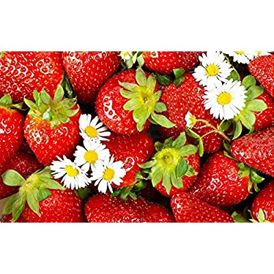 Strawberry Seeds Berries Seed Renaissance from Ukraine : Garden & Outdoor