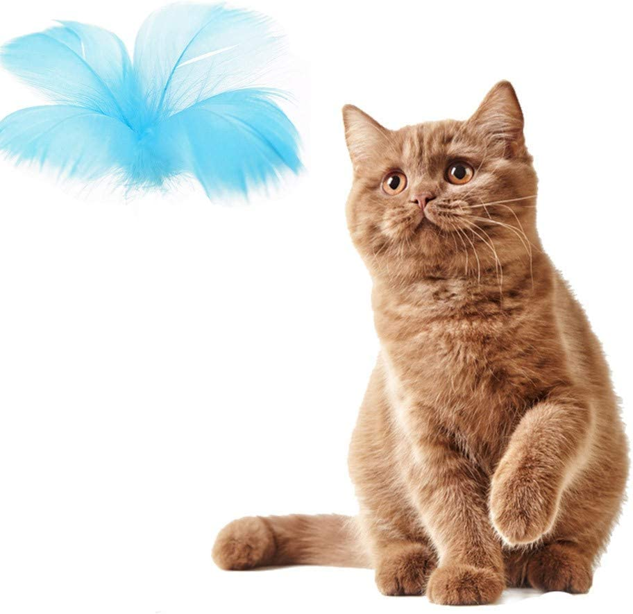 Balai Natural Healthy Pet Snacks And Tumbler Toy With Feather For Cats Delicious Catnip Ball And Silvervine Stick