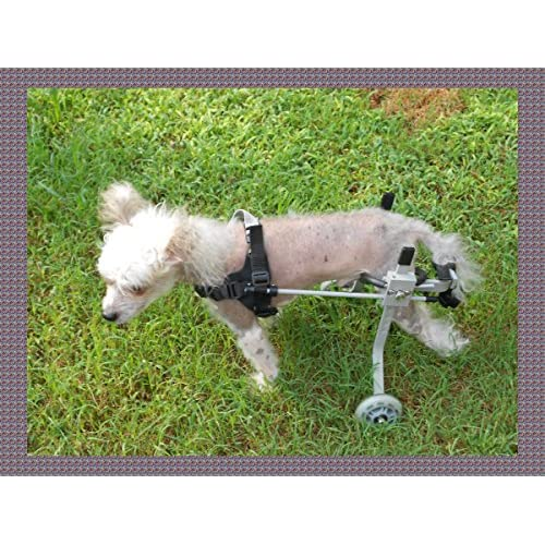 80 off dog wheelchair for ultra small dog size 1 by huggiecart