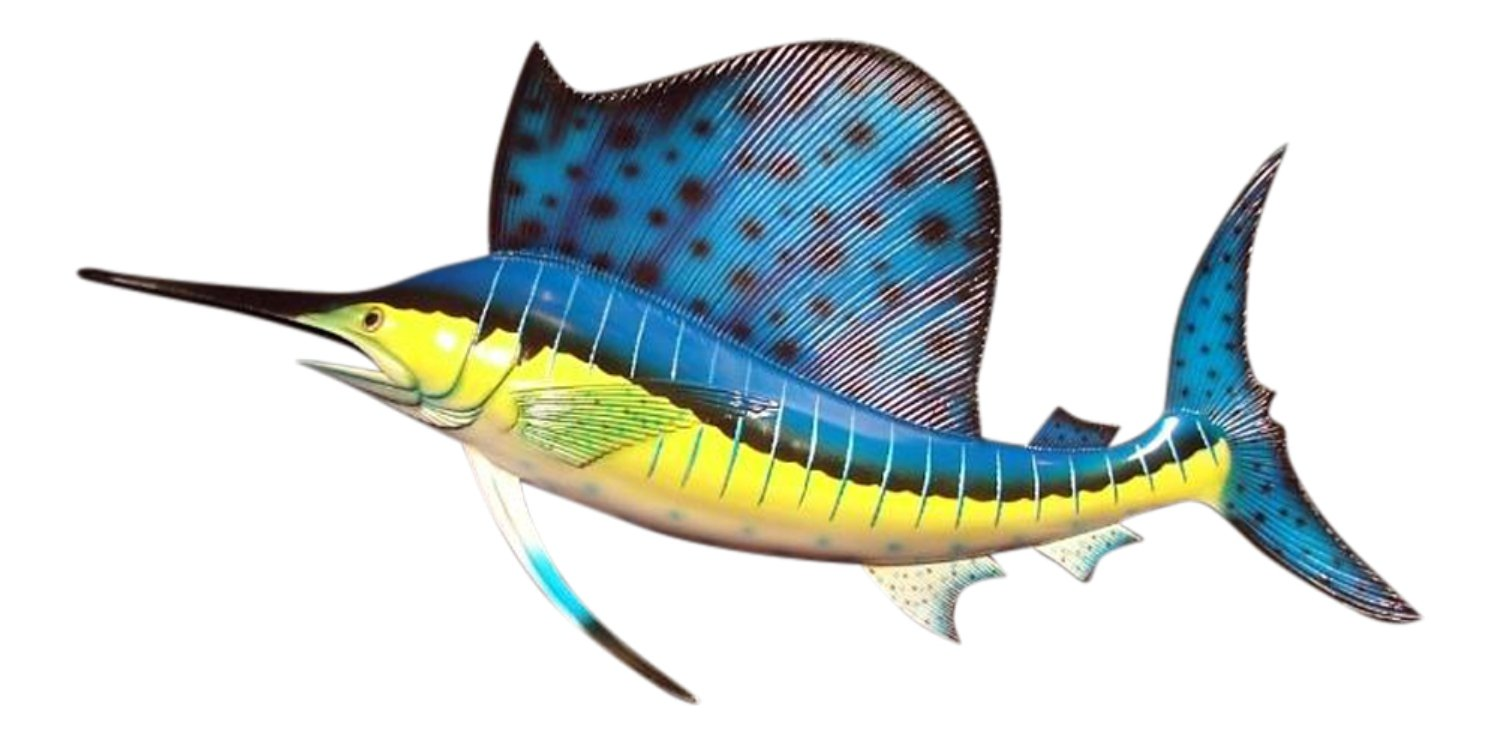 Charlotte International Ocean Sailfish Salt Water Fishing Replica Wall Mount