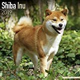 Shiba Inu Calendar - Dog Breed Calendars - 2018 - 2019 Wall Calendars - 16 Month by Avonside