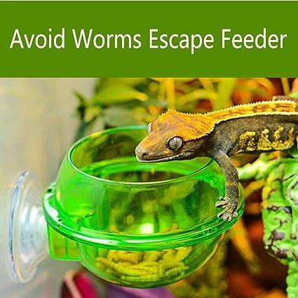 Daisy gecko feeding ledge